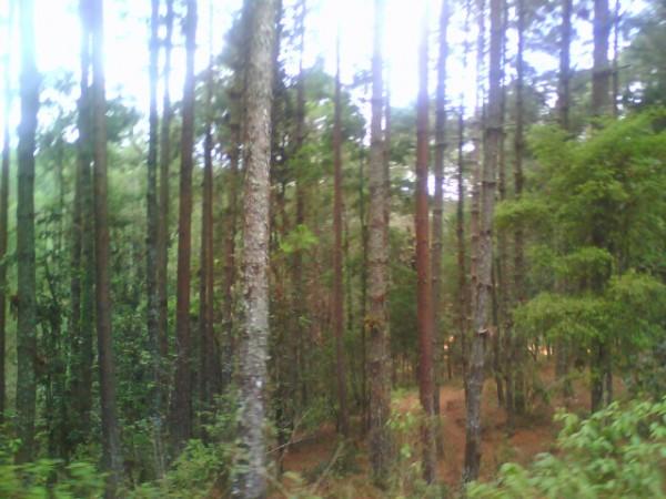 La tala de árboles, otro abuso