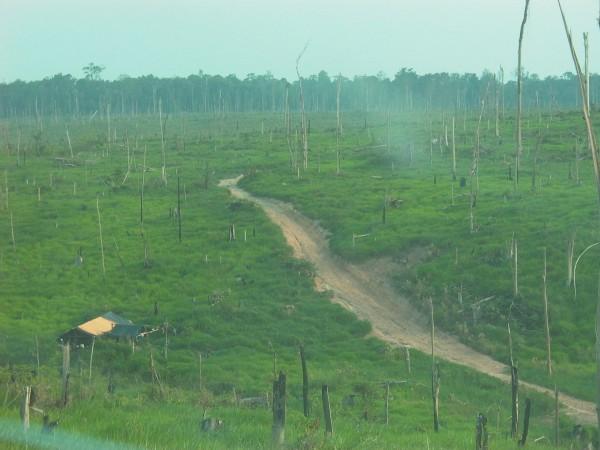 Tienda y trabajadores en medio de la foresta devastada