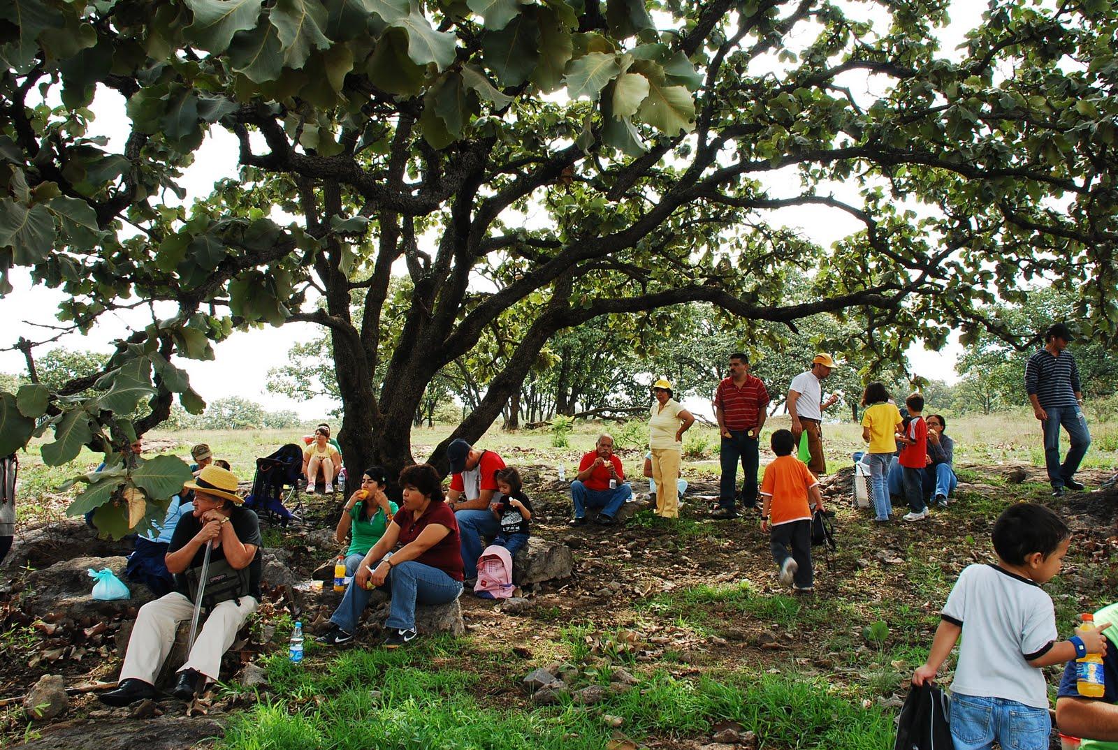 Foto:Comité en Defensa del bosque El Nixticuil
