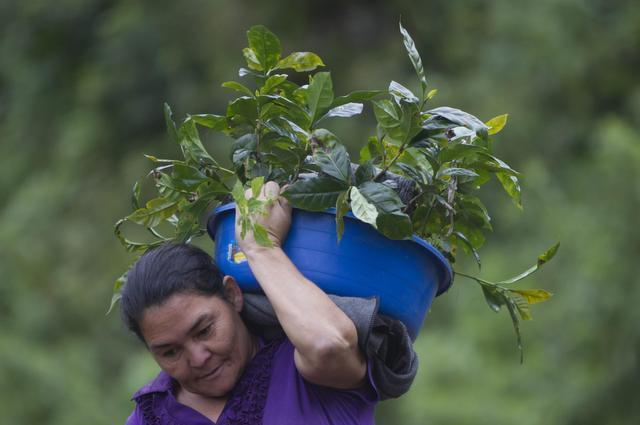 cafe mujeres honduras