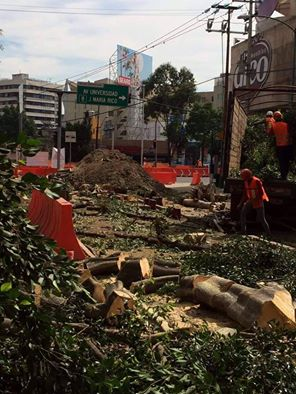 Y mientras tanto...? En Mixcoac, tala indiscriminada de árboles el día de ayer.