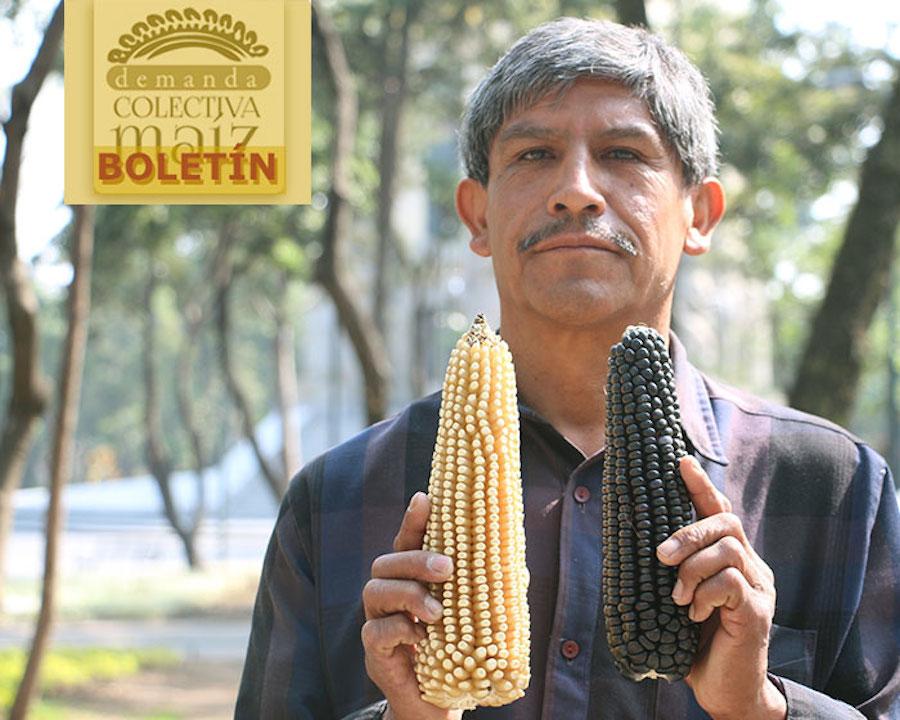 maiz emiliano demanda copia