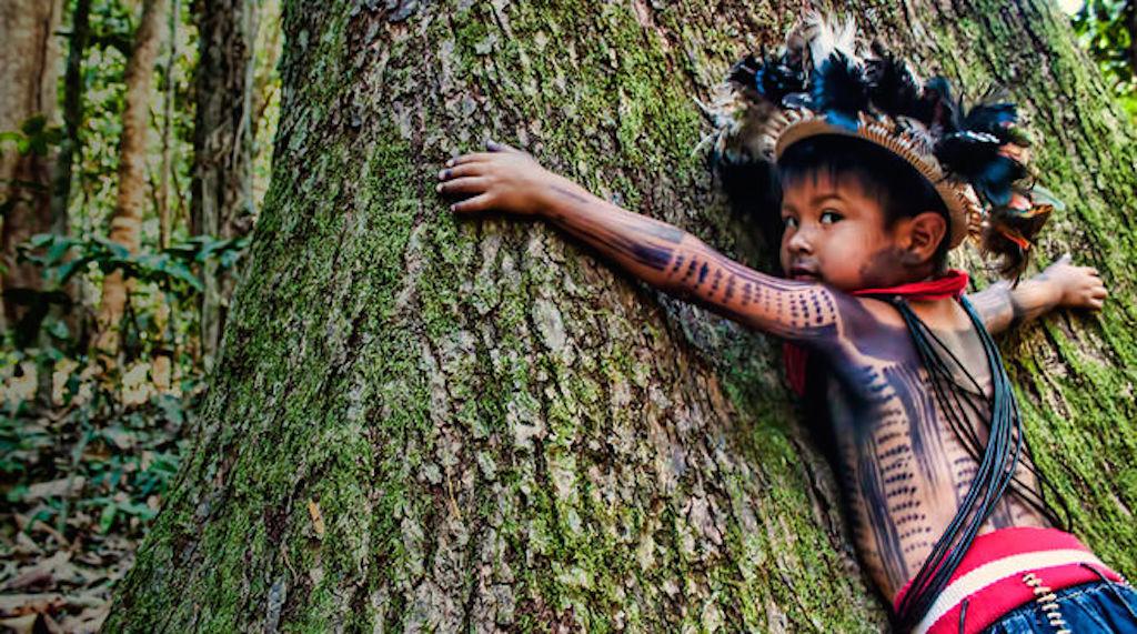 brasil amazonas 5