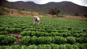 campesinos_o_agroindustria_xlarge