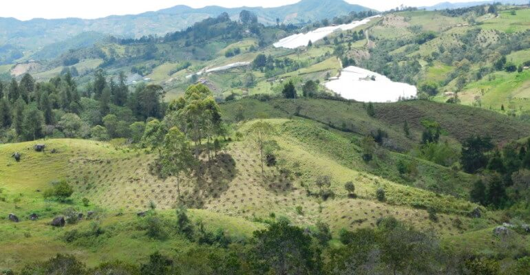 bosques-andinos-e1518462767677-770x400